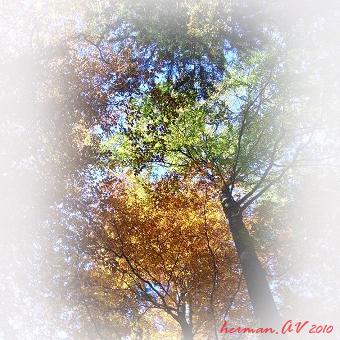 tvoj strom