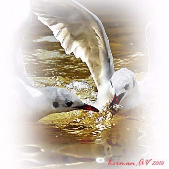 vtáci3
